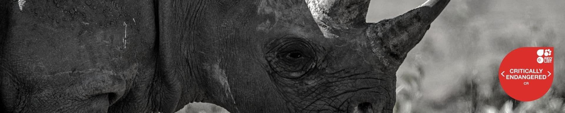 Como é definido se um animal está ou não em extenção?